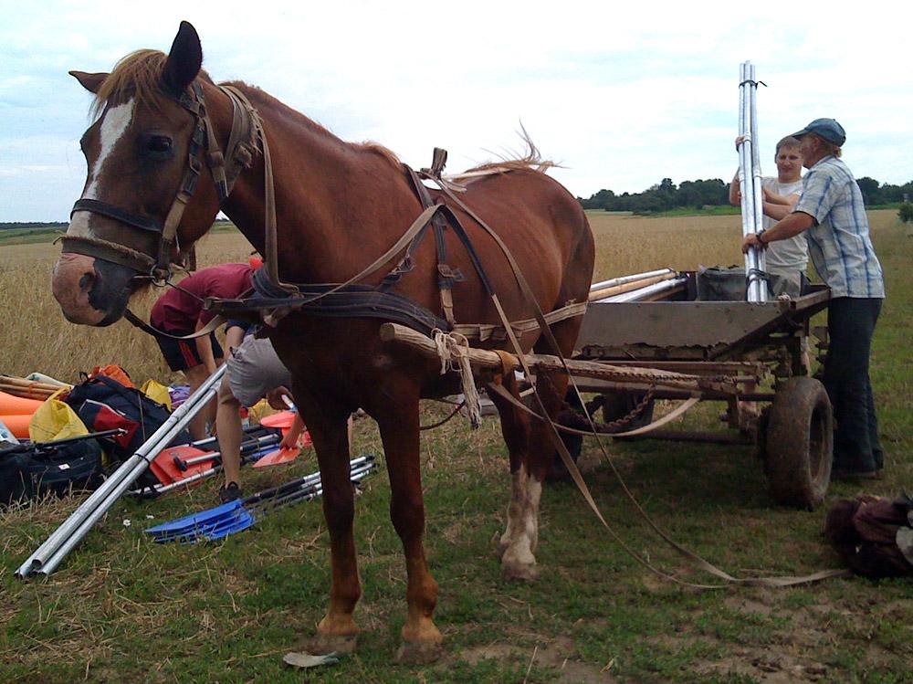 лошади вездеходы