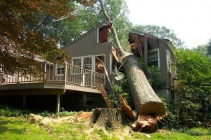 дом дерево человек