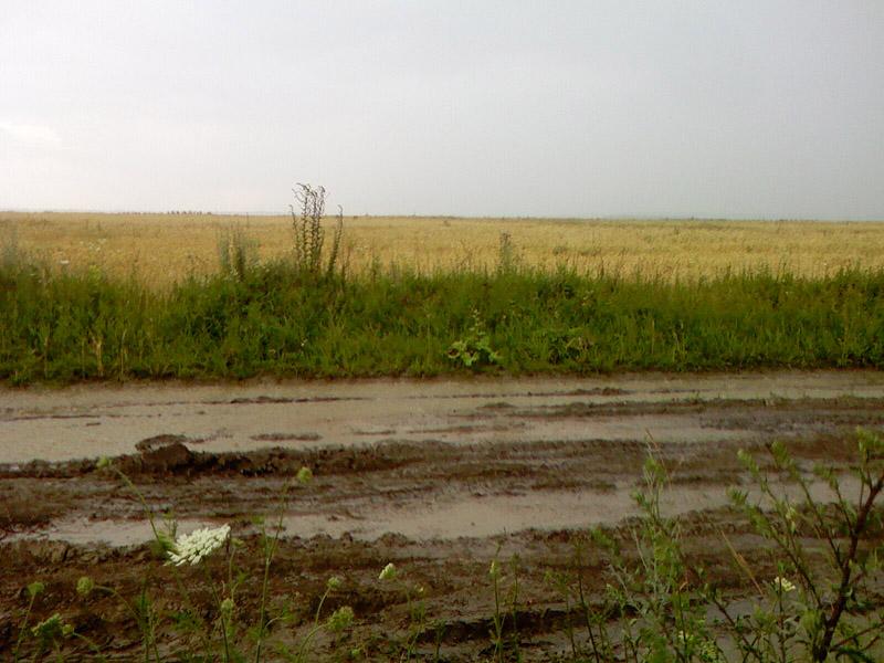 болотная дорога
