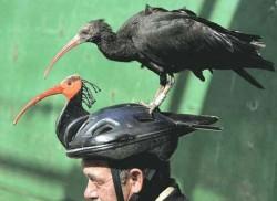 шлем для бакланов