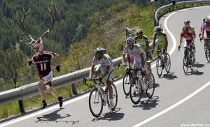 Шоссейный велосипед и олени бегуны