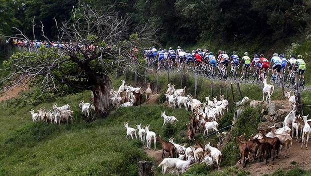 Велосипедисты и всякие козлы