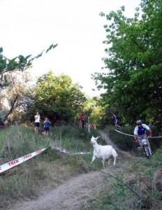 велосипед и коза