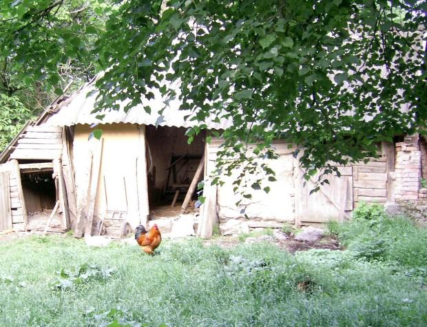 Винниччина, село Потуш, аццкий петух