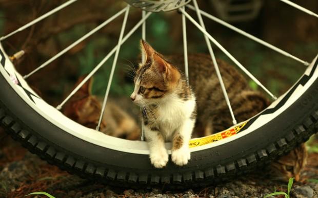 обои с велосипедом
