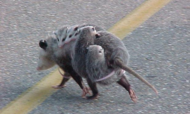 поздравления с 8 марта — мышка