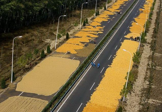 Окрестностях Пекина. Китайцы сушат кукурузу на трассе