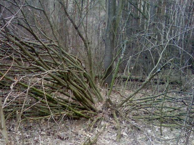 Велосипедный туризм, Винница, в лесу, дерево