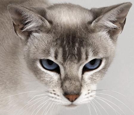 Кот подозрительно глядящий