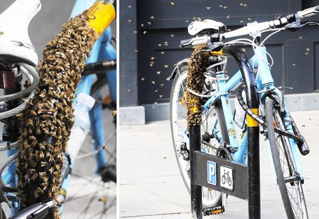 велосипедный замок – подводные пчелы и велосипедный мед