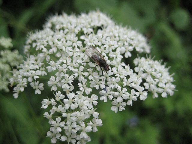 окрестности Алма-Аты цветы