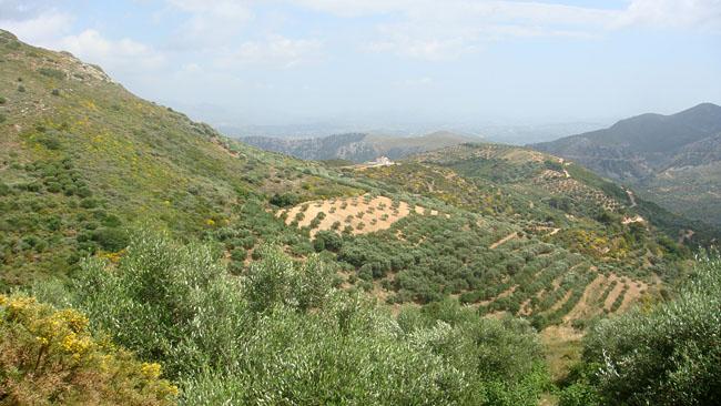 Флора и фауна Греции