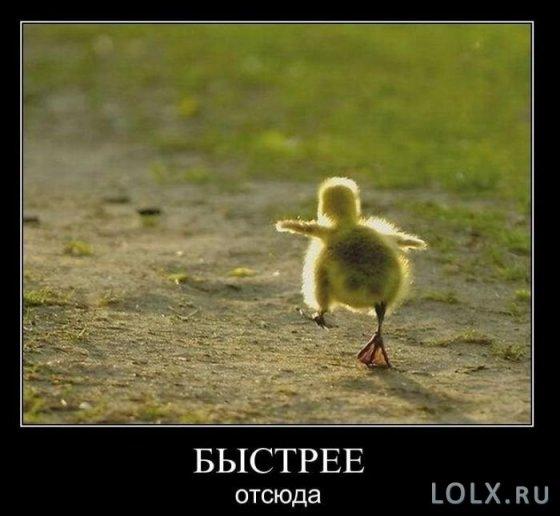 какой же русский не любит быстрой езды