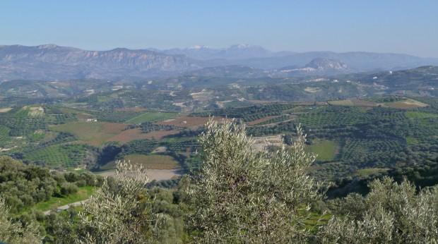 Оливка – Золотой запас Греции