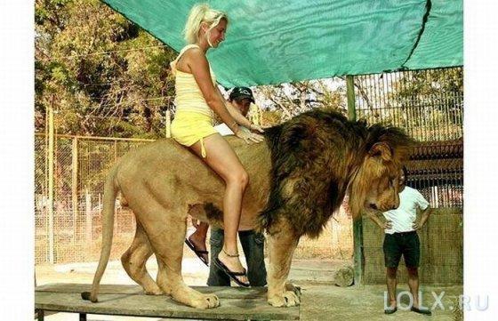верхом на льве