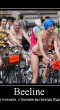 велосипед beeline