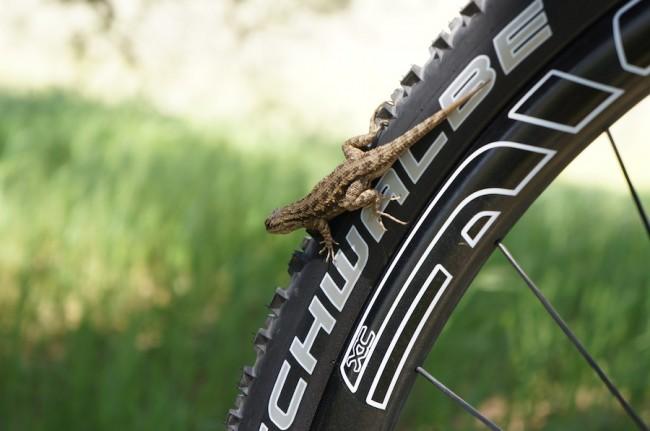 реклама велосипедной резины schwalbe