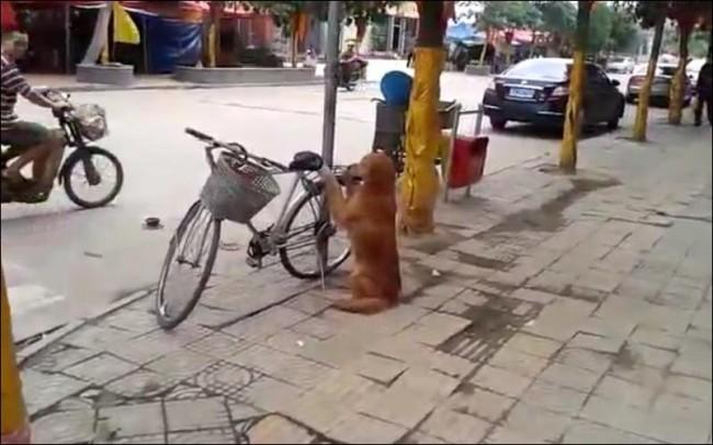 Достаточно правильный велосипедный замок