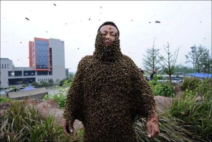 велосипедные пчелы