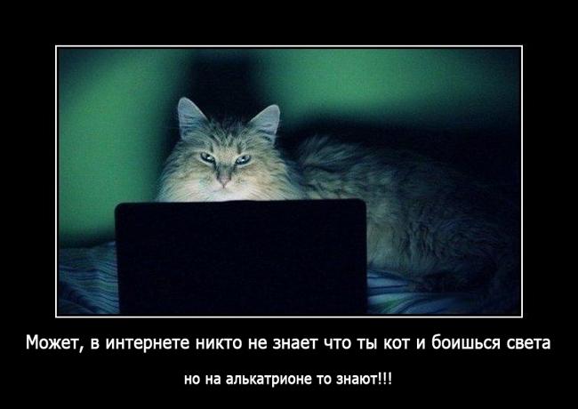 как загорают Коты
