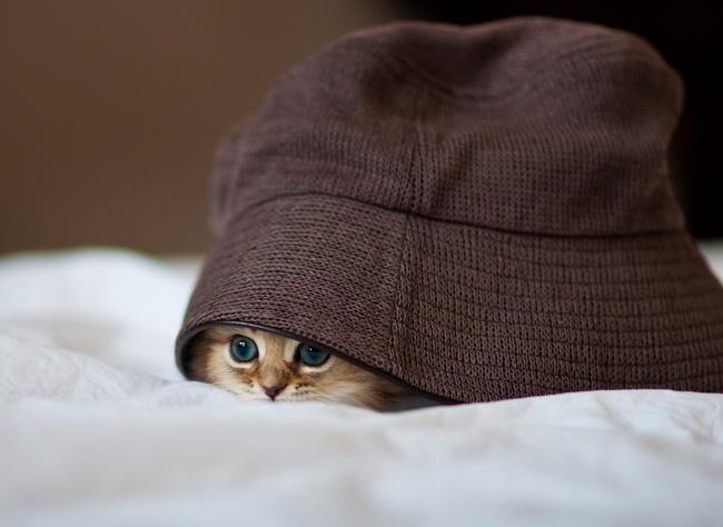 С Днем Рождения, мартовский Кот!