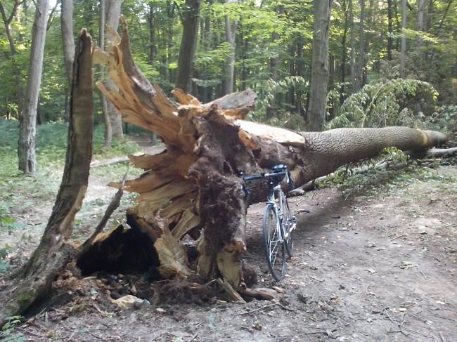 упавшее дерево и велосипед
