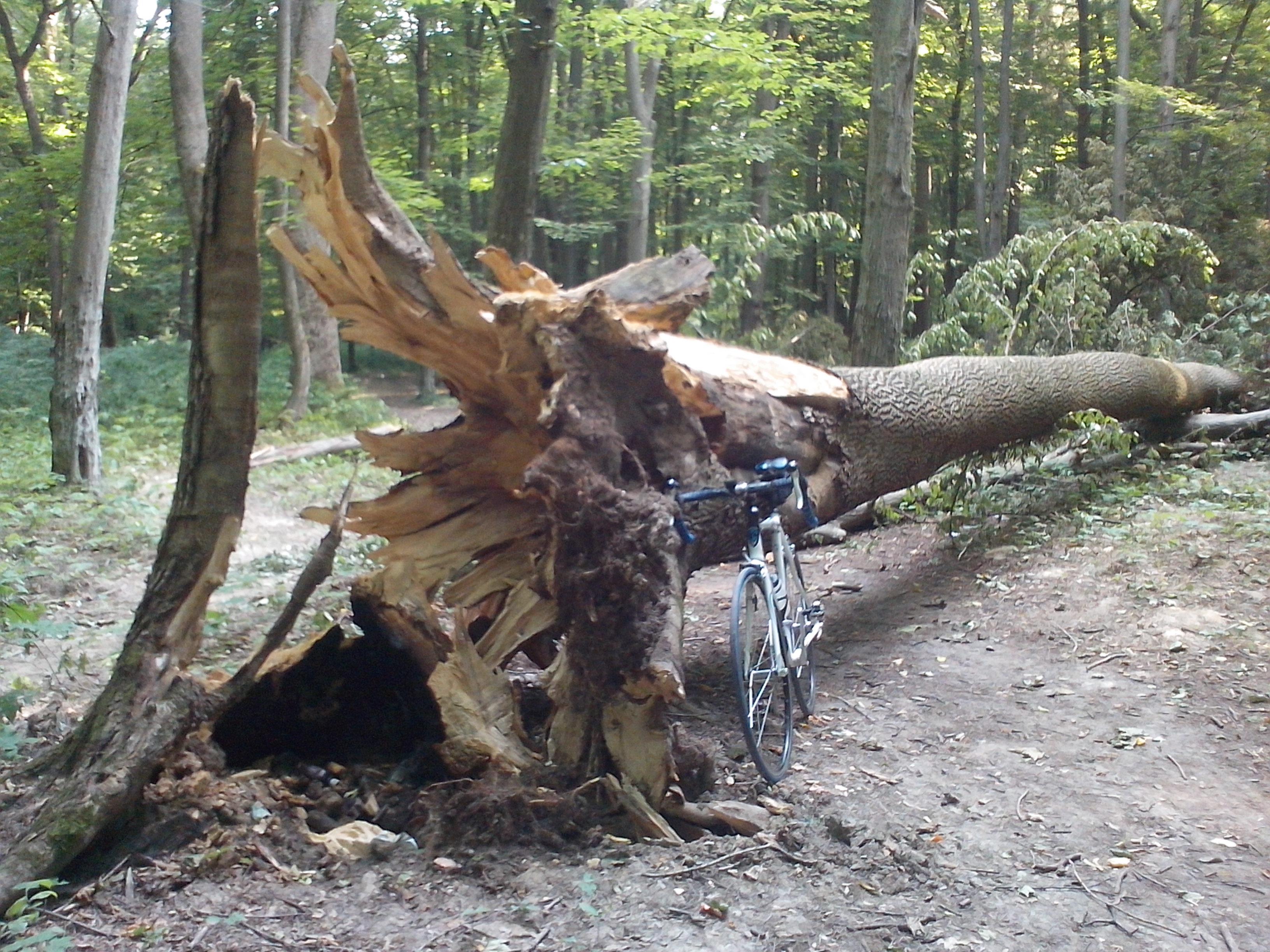 Секс на дереву 5 фотография