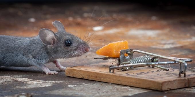 отважный мышонок
