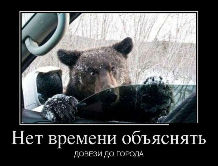 медведь Сибирь