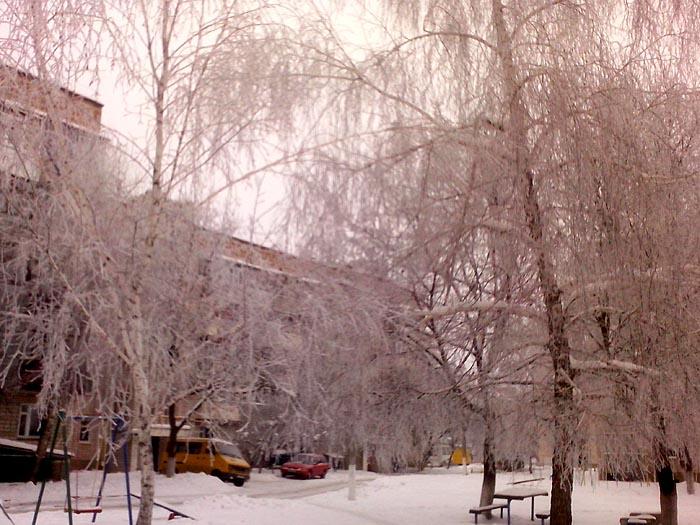 березы в снежной пыли