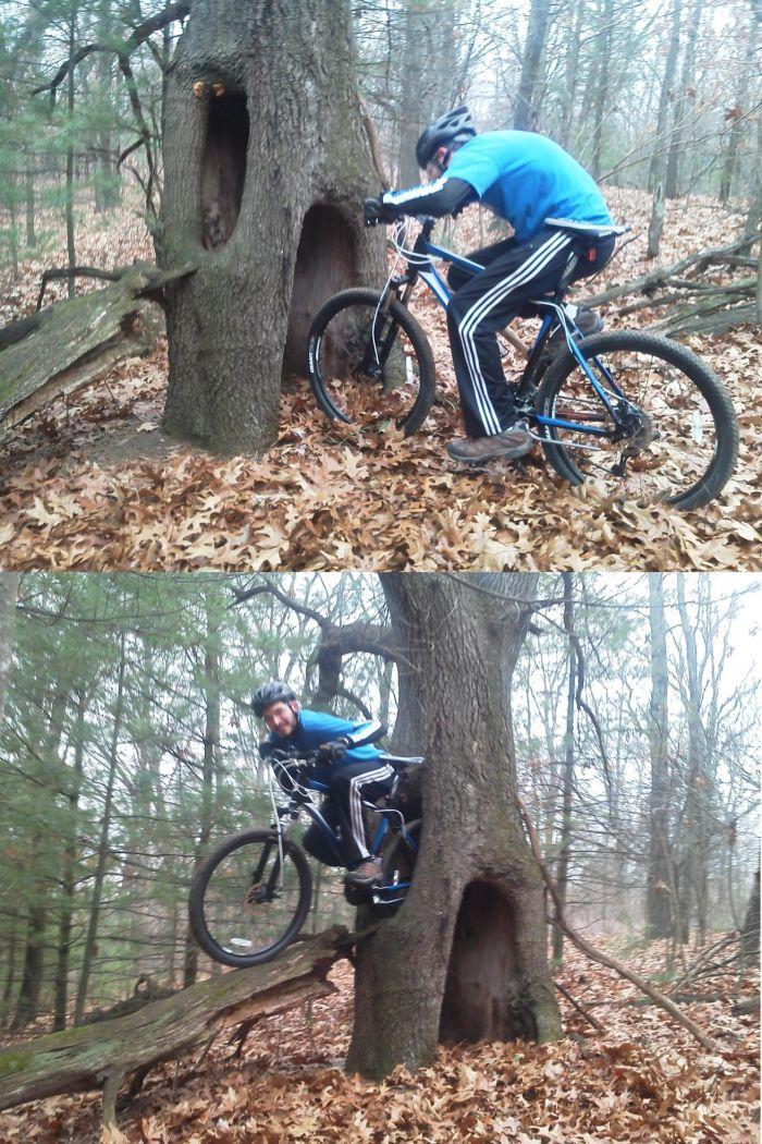 Сквозь дерево