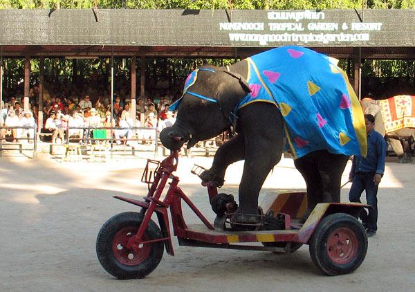 Велосипед для слона