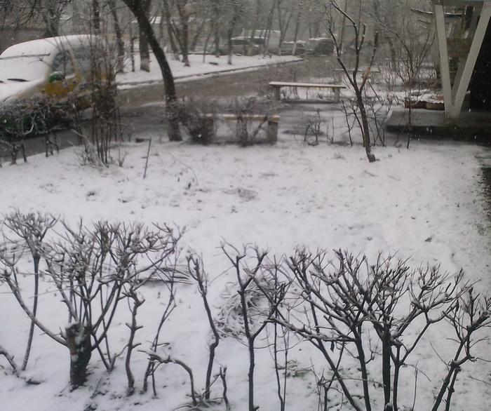 Весенний снег в Виннице