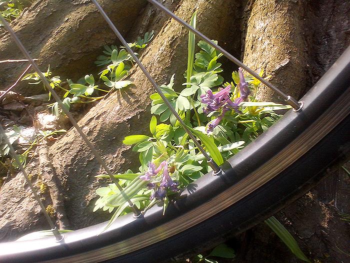 Цветы и велосипедное колесо