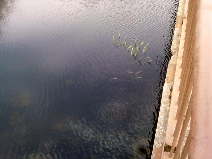 Вид с моста, прозрачная вода