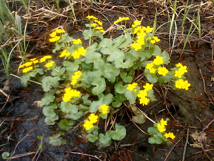 В болоте встречаются цветы