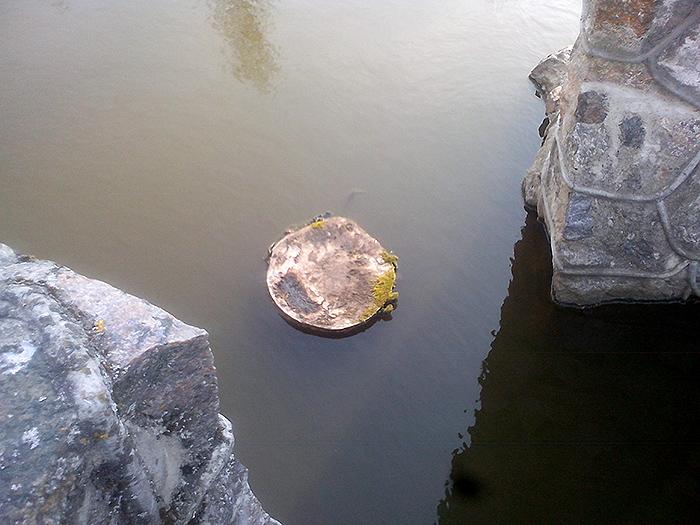 Срезанная верба. Раньше росла прямо в воде