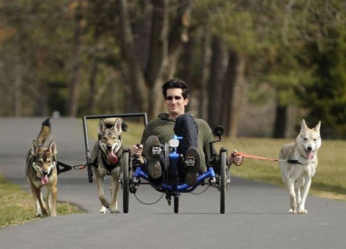 на велосипеде на собаках