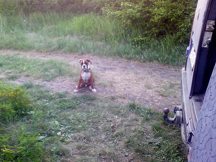 Провожающий пёс Арчи