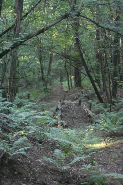 трамплин в лесу