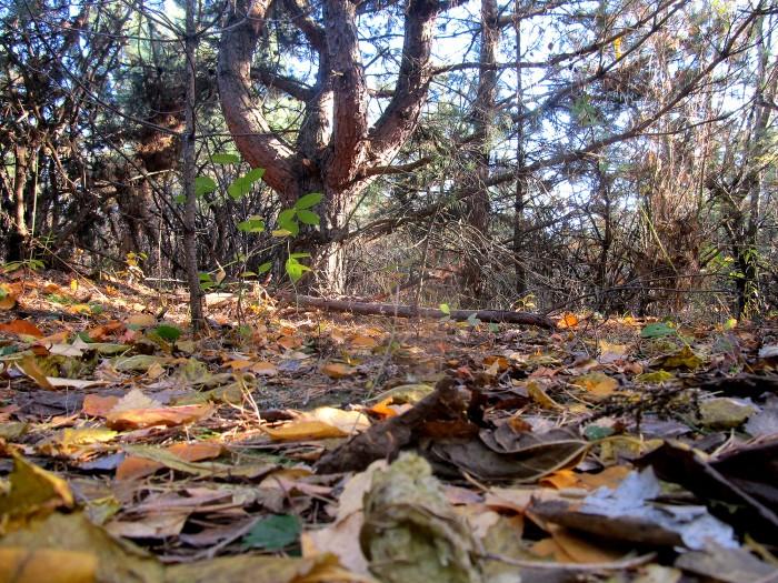Место в лесу