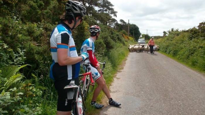 Овцы и велосипедисты