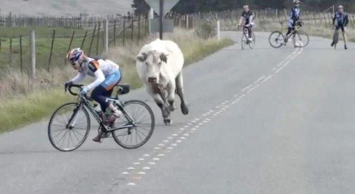 Как велосипедисту шоссейнику получить неожиданное и мощное ускорение на финише?