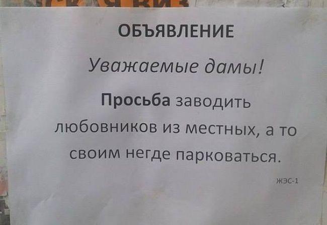 humor (19)