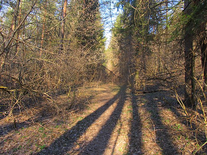 В лесу поваленных много деревьев