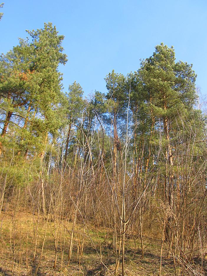 Чистое небо Украины