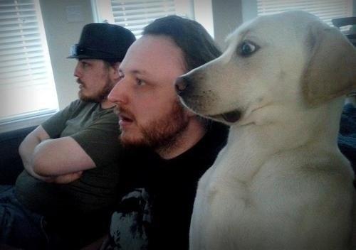 охуевшая собака