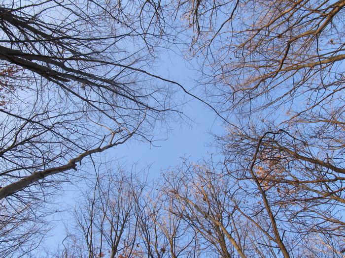 Утренний лес Небо