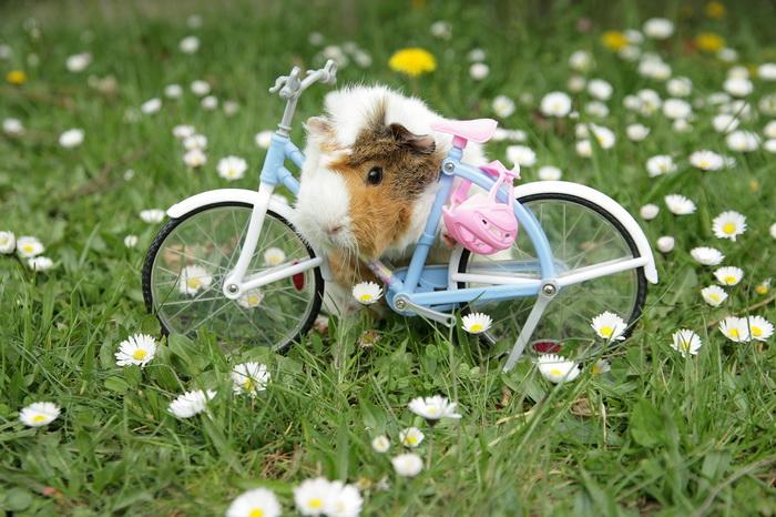 велосипедист животное