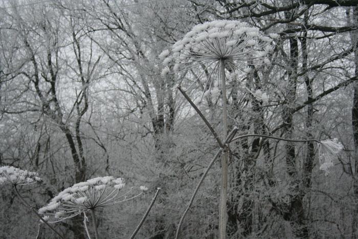 Иней, зима